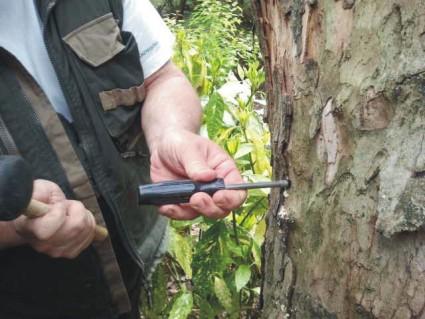 Gyomirtó fára
